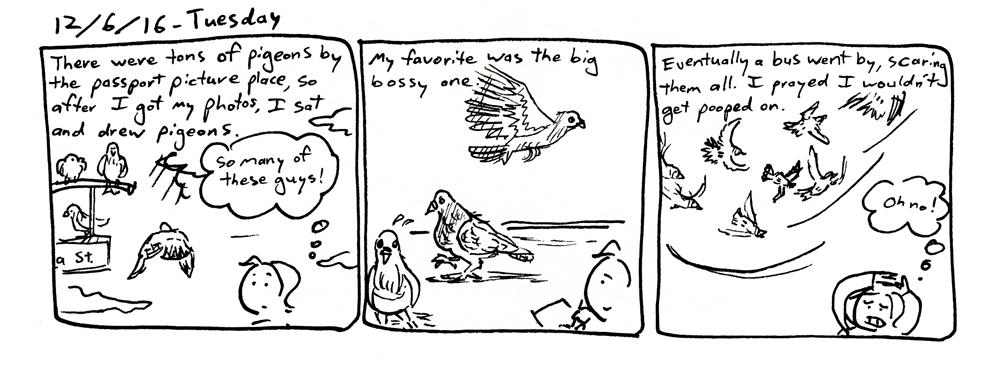 Big Bossy Pigeon